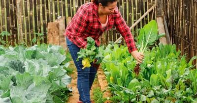 Mujeres emprendedoras de Tekoporã acercan productos orgánicos hasta la casa