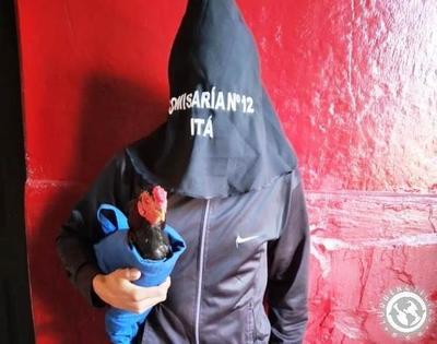 Riña de gallos acaba con 5 detenidos • Luque Noticias