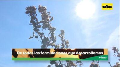 Abc Rural: Control de malezas de hojas finas y hojas anchas