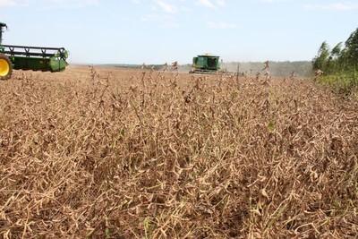 Sequía afecta al trigo y amenaza la siembra de soja