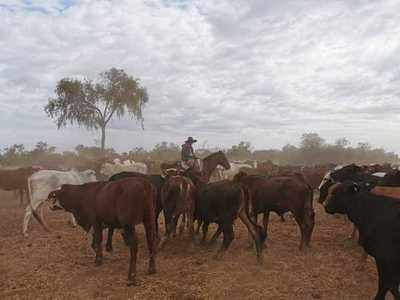 FARM criticó mensaje de la ONU y defendió la cadena regional de la carne