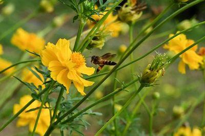 Contaminación del aire amenaza a abejas silvestres