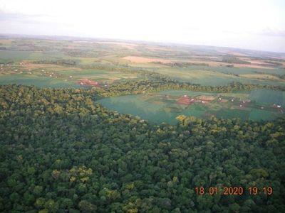 Tribunal sentencia a empresario a reforestar 1.860 hectáreas eliminadas