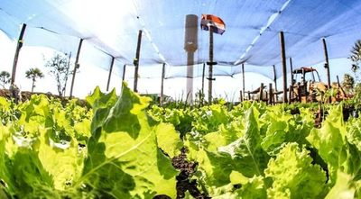 Realizan análisis económico y financiero de inversiones en el sector agrícola