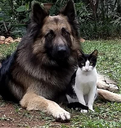 Programa de Control de zoonosis atiende 3.000 mascotas al año