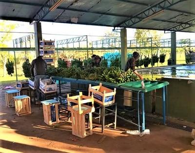 Partió a Argentina la quinta carga de bananas de productores de Tembiapora
