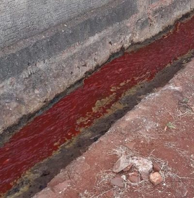 Dos imputados tras intervención por presunto daño ambiental en matadería municipal de PJC