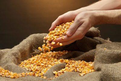 Producción de granos espera positivo cierre de año
