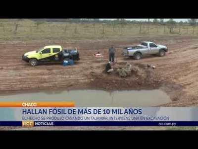 HALLAN FÓSIL DE MÁS DE 10 MIL AÑOS EN COLONIA MENONITA DEL CHACO
