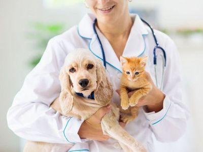 3.000 mascotas asistidas al año para control de zoonosis