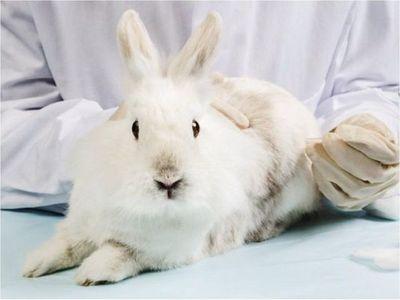 Colombia prohíbe las pruebas de productos cosméticos en animales