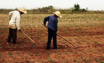 La agricultura campesina perdió 166.347 ha. en los últimos años