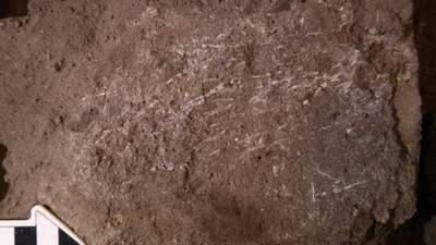 Los humanos usaban lechos de hierba y ceniza hace 200.000 años