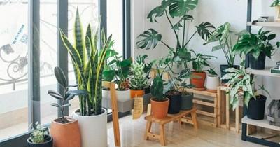 Plantas para armar un hermoso jardín en tu hogar