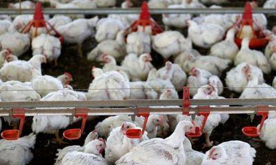 Filipinas prohíbe importación de pollo desde Brasil por temores sobre coronavirus