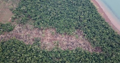 Ambientalistas rechazan pedido de  Friedmann de cambiar Ley Forestal