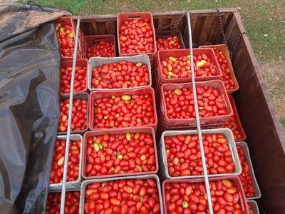 Cae en Concepción cargamento de supuesto contrabando de tomates
