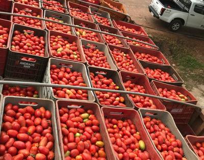 Horqueta: Incautan 500 cajas de tomate de supuesto contrabando