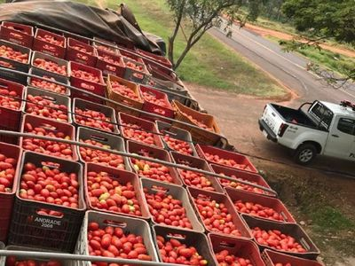 Requisan 15.000 kilos de tomate de contrabando