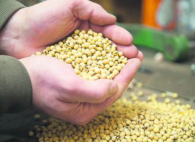 Amplia oferta no supera a la demanda y precios de la soja tienen reacción positiva