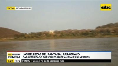 Las bellezas del pantanal paraguayo