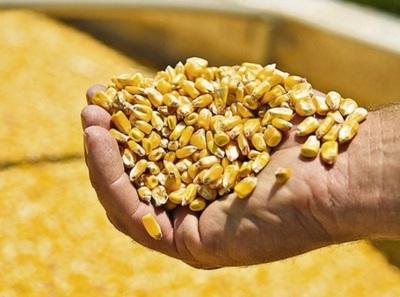 Argentina: volumen récord anotado para exportar maíz de la próxima cosecha