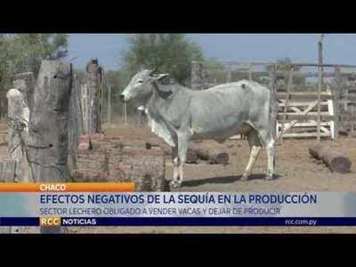 PRODUCTORES DE LECHE SON LOS MÁS GOLPEADOS A CAUSA DE LA SEQUÍA