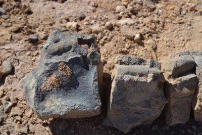 Identifican dos reptiles marinos jurásicos que moraron el desierto de Atacama
