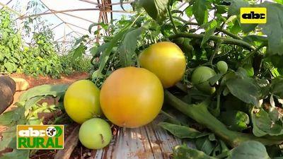Abc Rural: Solarización de suelo en invernaderos