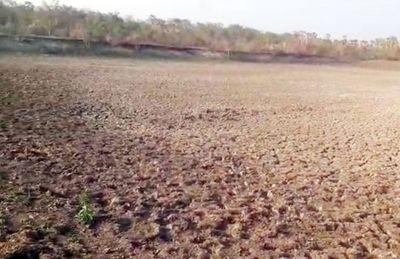 Copiosas lluvias cambian panorama en el departamento de Alto Paraguay