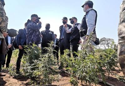 'Operación Nueva Alianza XXII' logra destrucción de más de 127 hectáreas de cultivos de marihuana en Amambay