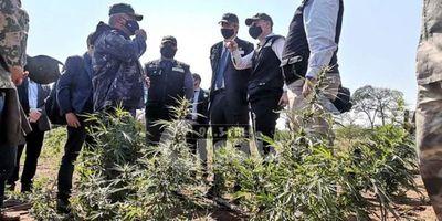 Ministros de Seguridad de Paraguay y Brasil visitaron marihuanal en Amambay