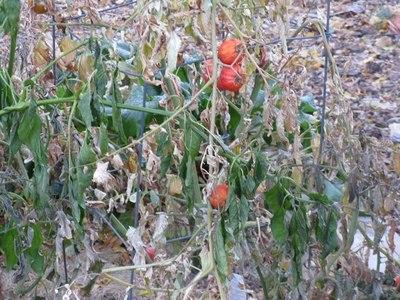 MAG: Bajas temperaturas podrían afectar los cultivos