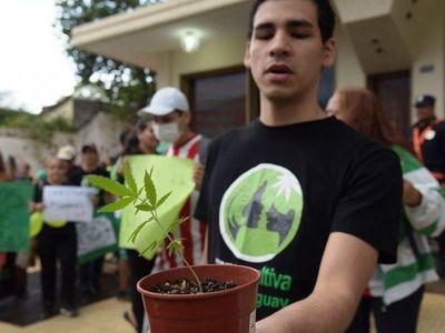 Congreso sanciona proyecto de ley que despenaliza el cannabis medicinal