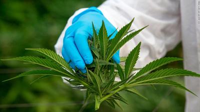 Quedó sancionada la ley que despenaliza el uso del cannabis para fines medicinales