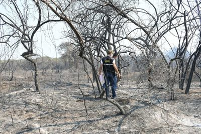 Bahía de Asunción: Fuego afectó principalmente hábitat de aves playeras y migratorias