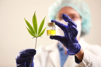 Aprueban ley que despenaliza autocultivo de marihuana medicinal