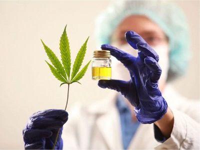 """Ley de cannabis medicinal no garantiza un producto """"seguro"""""""