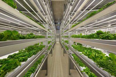 IA y drones para cultivar alimentos frescos