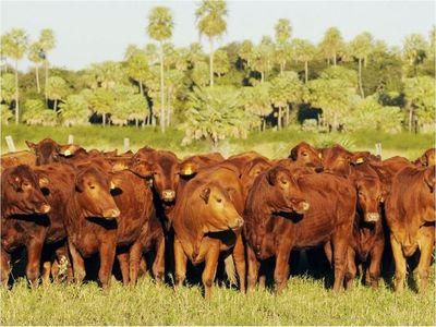 Gobierno defiende a la ganadería ante acusaciones de deforestación
