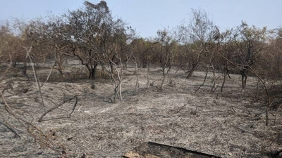 HOY / Insalubre calidad del aire: la mayoría de los incendios son provocados