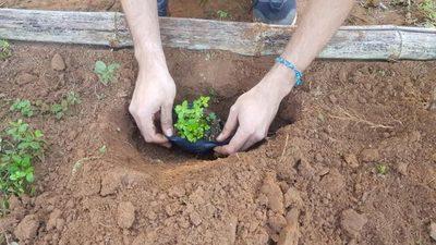 Realizarán talleres para conocer propiedades de las plantas medicinales