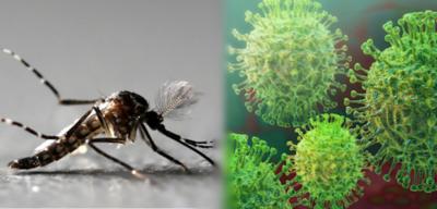 HOY / Una persona puede tener Covid-19 y dengue al mismo tiempo, advierte Senepa