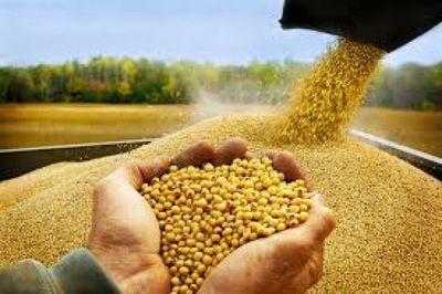 Precio de la soja continúa ganando posición en la Bolsa de Chicago