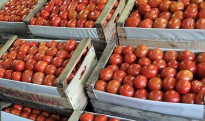 Productores plantean importar tomates para que bajen los precios