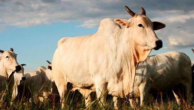 Seguro pecuario, una opción para el productor ganadero en tiempos de crisis