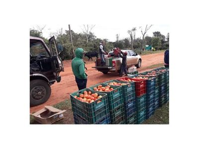 Importadores presionan para ingreso de tomate extranjero