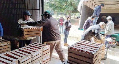 Prometen mejorar precio y calidad del tomate paraguayo