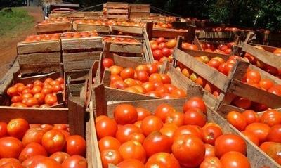 HOY / Ministerio de Agricultura evalúa situación del tomate nacional en el campo