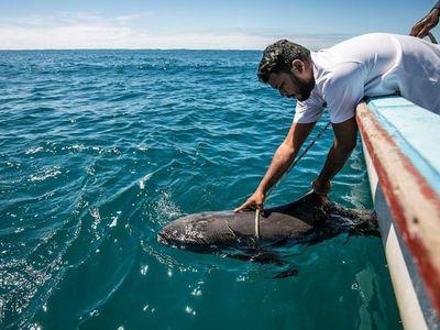 Japón ofrece ayuda a Mauricio para limpiar el vertido de crudo